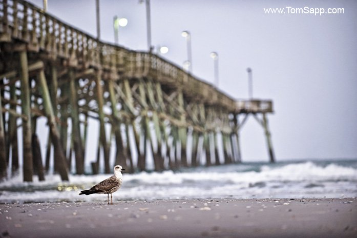 Topsail Island Photography